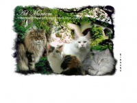 Maine-coon.at