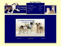 chinese-crested.at