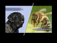 Dogs-and-honey.at