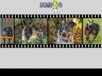dogs4u.at
